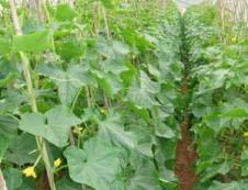 儋州沣顺种植专业合作社