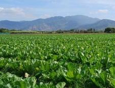 儋州富星果菜农民专业合作社