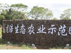 海口龙浩 (6)