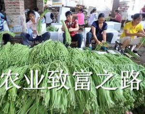 生财有道 纵观农业致富(二)
