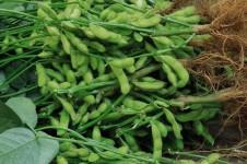 东方市国庆种植农民专业合作社