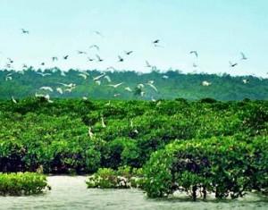 看海南红树林