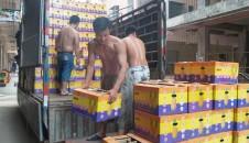 本公司今日向辽宁兴隆大家庭供应水果7万余斤