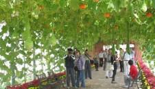 海南省现代农业展示示范园
