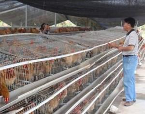 海南灾后组织恢复农业生产工作及动物疫病防控