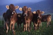 2014年中央财政补贴的养殖项目大全