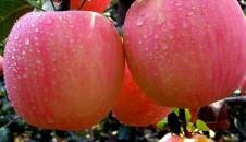 早熟苹果价格同比涨40% 富士苹果价格将上涨