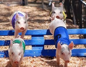 猪肉近期连续上涨