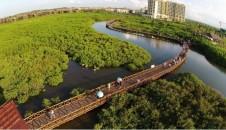航拍海南澄迈红树湾红树林湿地保护公园