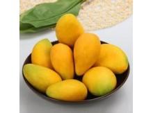 大台农芒果