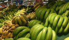 广东:香蕉收购价跌至0.5元/
